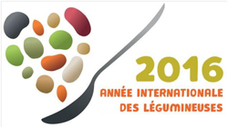 Concours Haricot 2016